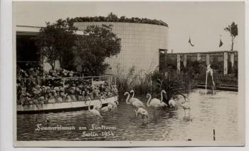 AK Foto Berlin Sommerblumen am Funkturm mit Flamingos 1934