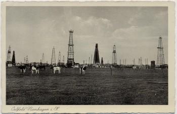 AK Nienhagen (Landkreis Celle) Ölfeld mit Kühen Niedersachsen 1935