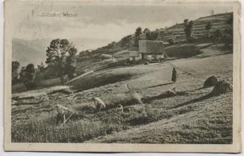 AK Metzeral Sillacker Wasen Heuernte Elsass Haut-Rhin Frankreich 1916