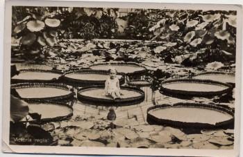 AK Foto München Nymphenburg Botanischer Garten Viktoria regia Kind Feldpost 1942
