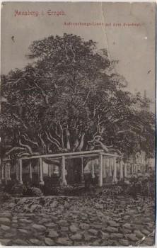 AK Annaberg-Buchholz im Erzgebirge Auferstehungs-Linde auf dem Friedhof 1910