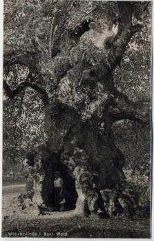 AK Foto Wolframlinde in Ried bei Kötzting 1930