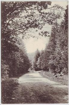 AK Gruss aus Schleswig Colonnen-Weg Kolonnenweg 1906