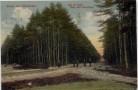 AK Gruss aus Dörverden Weg im Holze nach Diensthop mit Menschen 1915 RAR