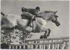 AK Reitsport KAMERAD unter Hermann Schridde Springreiten Continental Farmer 1970