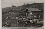 AK Foto Gindl Alm 1243 m mit Rinder bei Hausham 1930
