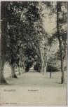 AK Braunfels Lindenallee 1914 RAR