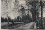 AK Hankensbüttel Weg von Emmen nach Wunderbüttel 1907