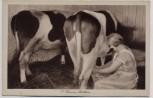 AK Landjugendheim Finkenkrug Beim Melken Kühe b. Seegefeld Falkensee 1930