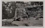 AK Foto Berlin Zoologischer Garten Löwen in Löwenfreianlage 1940