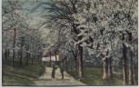 AK Cossebaude bei Dresden Eichberg mit Baumblüte 1910