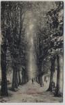 AK Wilster Allee im Colosseumgarten mit Menschen 1907 RAR