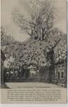 AK Fehmarn Bannesdorf Friedenspappel 1870/71 Feldpost 1916 RAR