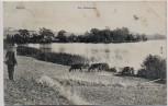 AK Mölln Lauenburg Am Drüsensee 1907