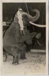 AK Foto Zirkus Frankello Karli Frankello mit Elefant 1957