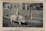AK Friedrichswerth in Thüringen Stammzüchterei des großen weißen Edelschweines Bewegung der Deckeber 1909 RAR