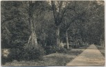 AK Hildburghausen Seufzer-Allee 1910