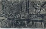 AK Pozdrav ze Bzence Bzenec Bisenz Alter Baum mit Frau Hodonín Tschechien 1921