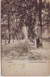 AK Demmin Promenade im Devenerholz 1925