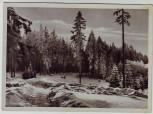 AK Tanne (Harz) Partie im Wald bei Oberharz am Brocken 1950