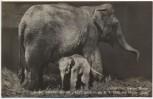 VERKAUFT !!!   AK Foto Zoologischer Garten Berlin Elefant Orje, geboren am 08.04. 1936, mit Mutter Aida