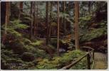 AK Waldeck (Thüringen) Die Buchen bei Bad Klosterlausnitz 1910
