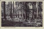 AK Ostseebad Kellenhusen in Holstein Waldpartie 1932