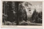 AK Foto Rotensol im Schwarzwald Waldpartie b. Herrenalb Landpoststempel 1952