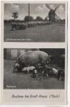 VERKAUFT !!!   AK Bochow bei Groß Kreutz Schafherde an der alten Mühle Mutterglück 1950 RAR