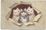 Künstler-AK 3 Katzen nach vorn schauend 1910