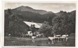 AK Foto Brannenburg Schlipfgrub Alm mit Rampoldplatte viele Rinder 1935