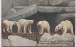 AK Hamburg Stellingen Carl Hagenbeck's Tierpark Eisbären im Nordland-Panorama 1910