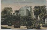 AK Hannover Herrenhausen Palmenhaus 1921