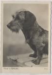 AK Foto Hund Dackel Teckel Dachshund Lumpi in Gedanken A.Dauer Deutsche Heimkunft-Karte 1937