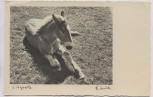 AK Foto Teschke-Karte Nr. 67 Mittagsruhe Pferd Fohlen 1940
