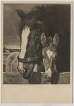 Künstler-AK München Haus der Deutschen Kunst Paul Junghanns Mutter und Sohn Pferd mit Fohlen 1940