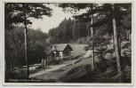 VERKAUFT !!!   AK Foto Dittersdorf (Saalfelder Höhe) Waldpartie im Oberen Werretal b. Schwarzburg Bad Blankenburg 1956