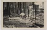 AK Foto Prieros Haus im Wald mit Wildschwein b. Heidesee 1960