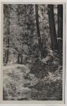 AK Foto Geschwenda Thüringer Wald Umgebung Im Sieglitzgrund 1955