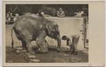 AK Foto Halle Saale Zoologischer Garten Elefantin Frida und Wärter Birke 1950