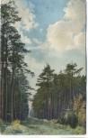 AK Dresdner Heide Motiv bei Bühlau Dresden 1912