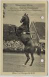 AK Gruß aus Celle Dürer I im Landgestüt Celle Pferd Hengst 1935