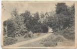 VERKAUFT !!!   AK Darmstadt Botanischer Garten Nadelholzgruppe 1911