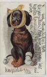Künstler-AK Dackel Dachshund mit Verband Zahnschmerzen 1911