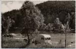 AK Foto Nesselwang im Allgäu Camping-Platz und Badesee 1960